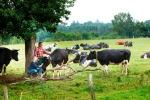 Gelukkige Demeter-koeien, Stedebach